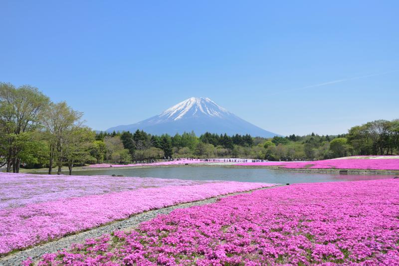 Kamiyubetsu Tulip Park, Ohotsuku, Japan