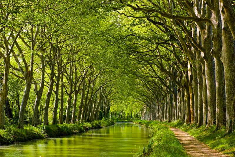 Green canopy over a peaceful canal in Toulouse