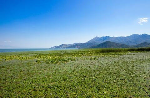 Lac de Shkodra