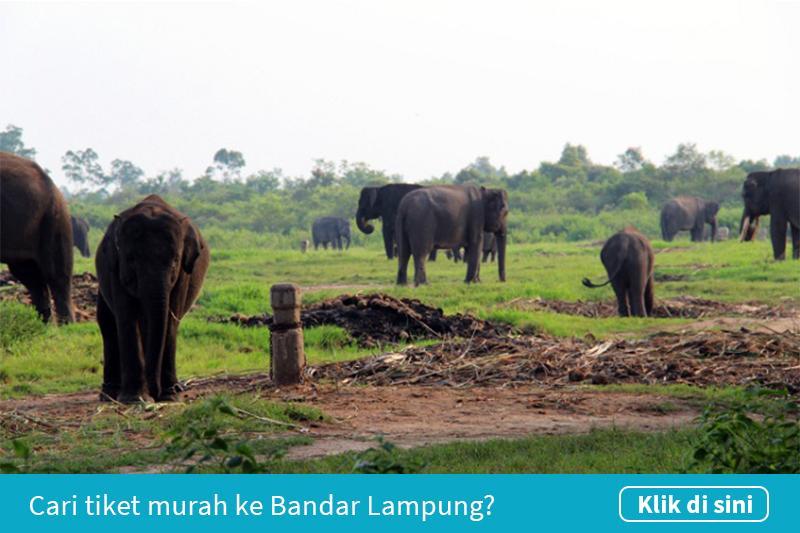 Klik untuk cari tiket pesawat murah ke Bandar Lampung