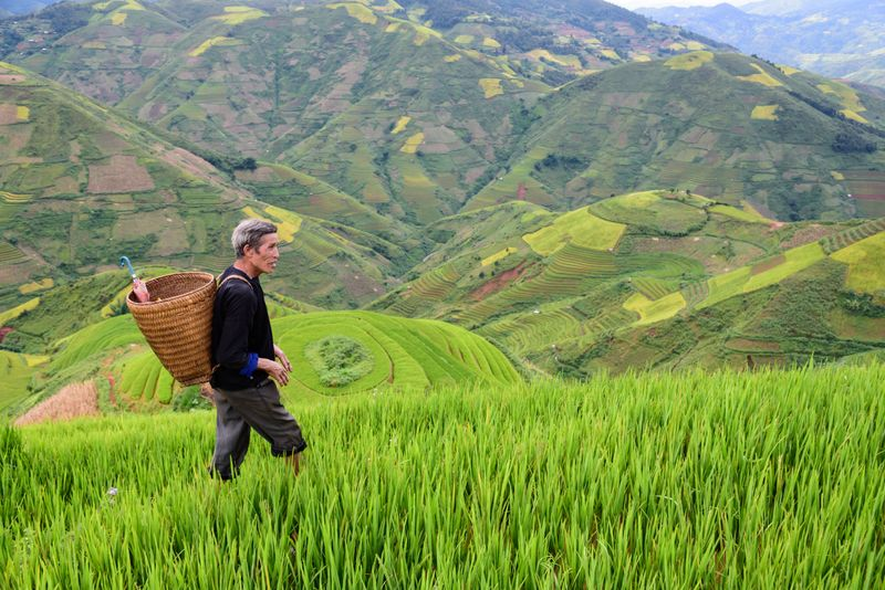 Rice terraces with farmer in rural Vietnam