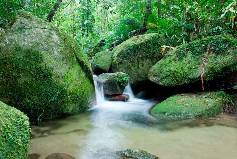 Daintree rainforest, in Australia