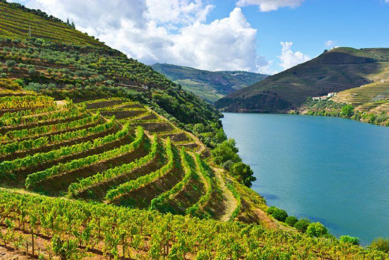 Виноградники в долине реки Дору, Португалия