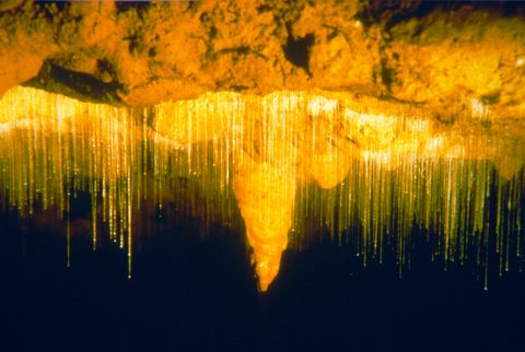 Dank Glühwürmchen strahlt die Waitomo Cave besonders schön.