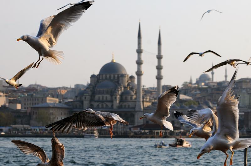 Куда поехать на выходные: чайки летают на фоне мечетей Стамбула