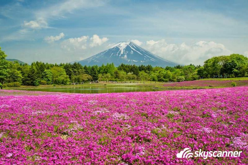 เที่ยวญี่ปุ่นฤดูใบไม้ผลิ