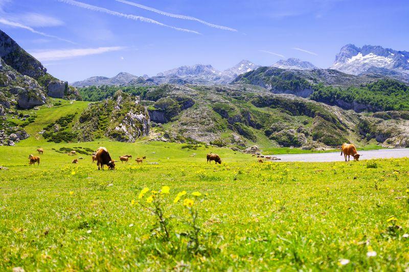 Parque Natural Asturias
