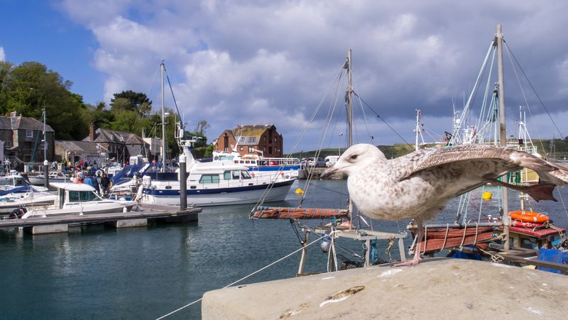 Padstow harbour view