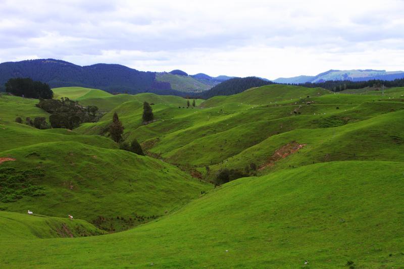 Những ngọn đồi thơ mộng ở New Zealand