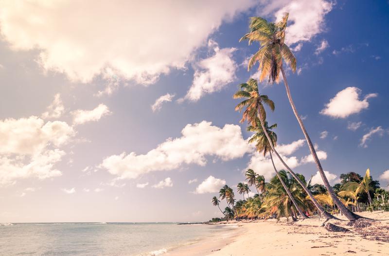 A white sand beach in the Dominican Republic