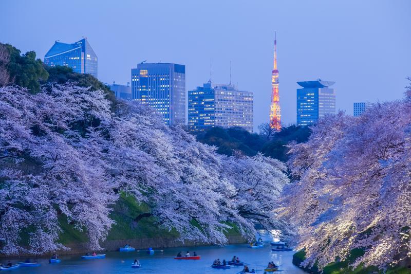 Κάτω από τις κερασιές στο Τόκιο