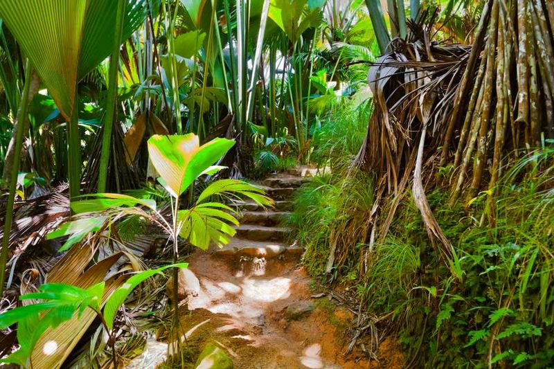 Джунгли на Сейшелах