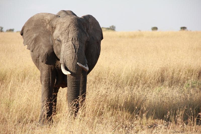 Savana di Afrika