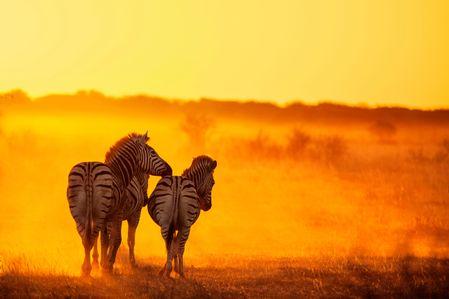 Зебры в национальном парке Хелс Гейт