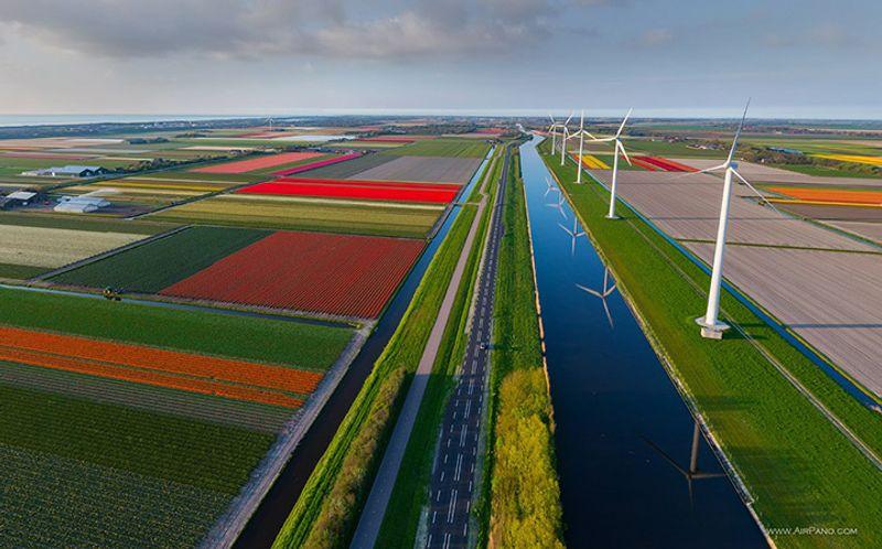 Tulpenfelder und Windmühlen in Holland