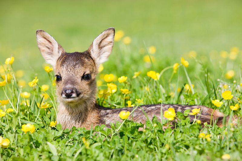 When to see baby deer