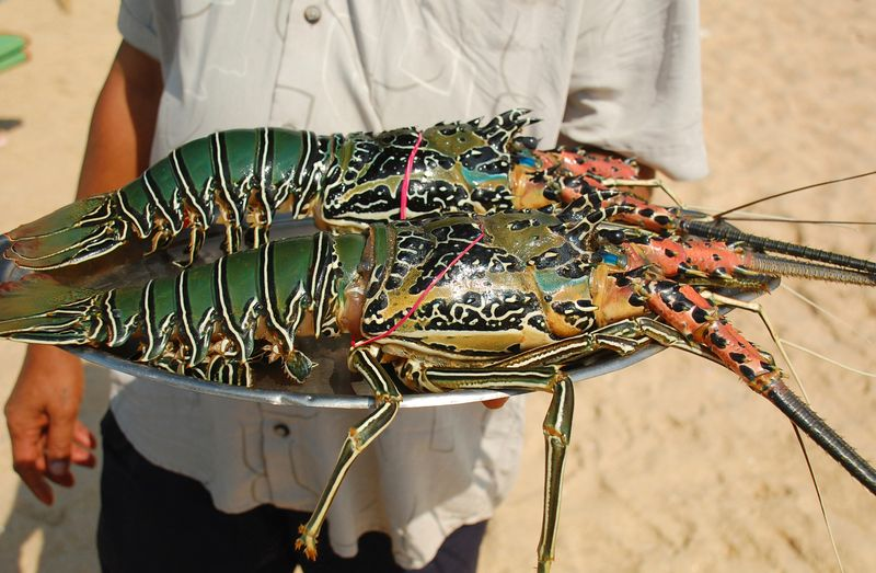 Lobster, held in hands, with black spots