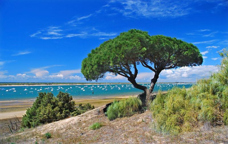 Las 12 mejores playas de andaluc a - Las mejores casas rurales de andalucia ...