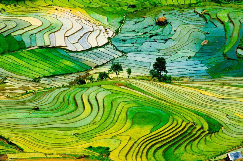 Рисовые террасы во Вьетнаме