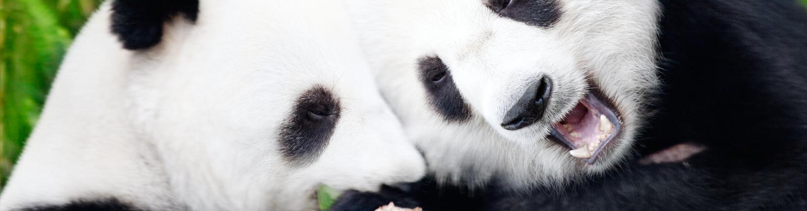 Destinos para colaborar en la protección de animales en peligro de extinción