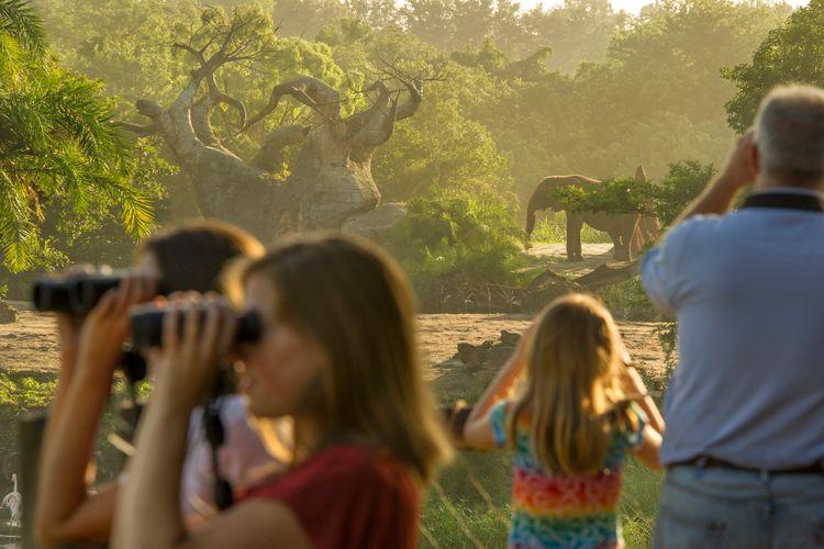 Safari en Animal Kingdom Walt Disney World Orlando