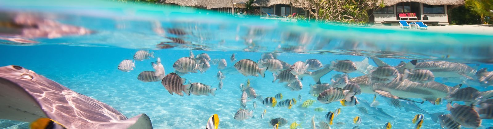 Los mejores hoteles bajo el agua de dub i a las maldivas for Hotel bajo el agua precio