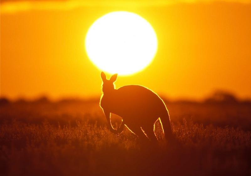 Panduan Mudah Membuat Visa Australia - Kangaroo