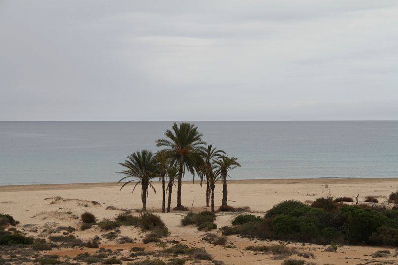 Playa de Arenales del Sol Elche