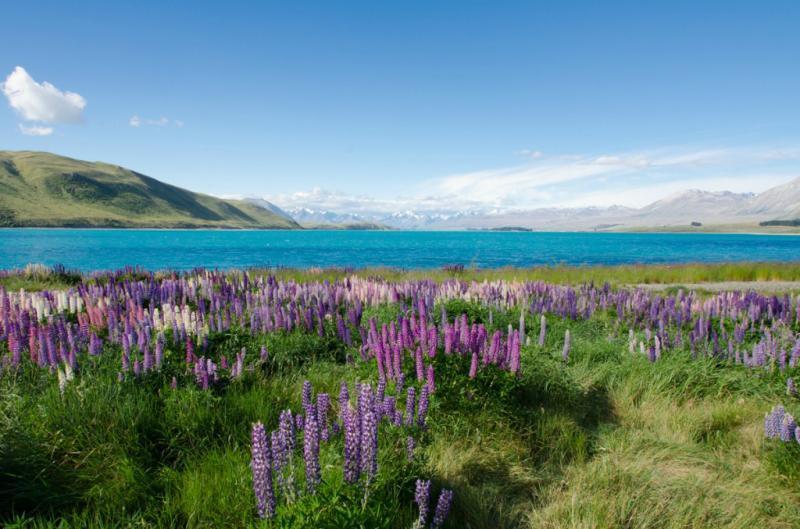 Il bellissimo lago Tekapo