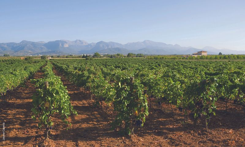 Binissalem has some of Mallorca's top vineyards