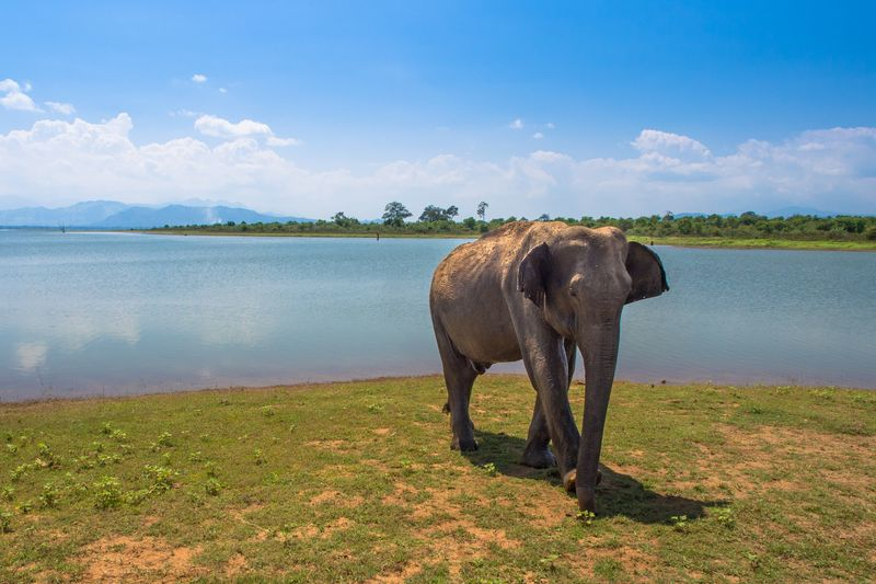 An elephant on the waterfront in Sri Lanka
