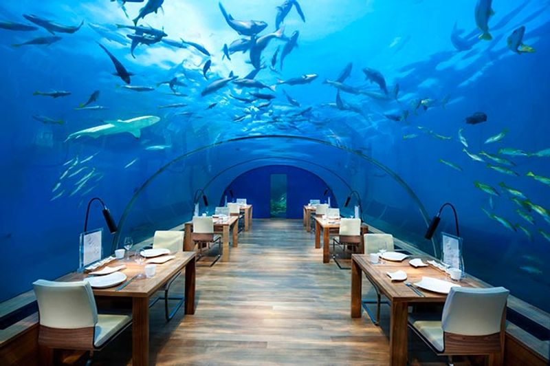 Essen mit den Haien: Unterwasser-Restaurant