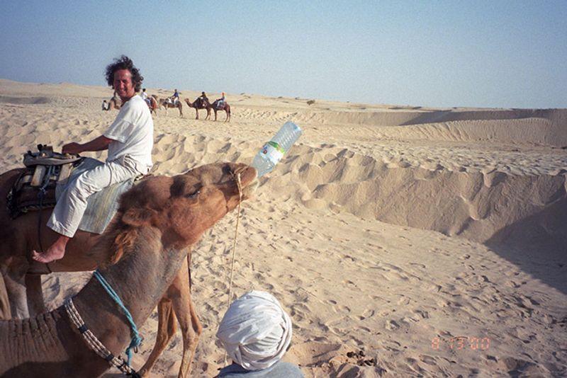 680-thirsty-camel.jpg?resize=800px:99999