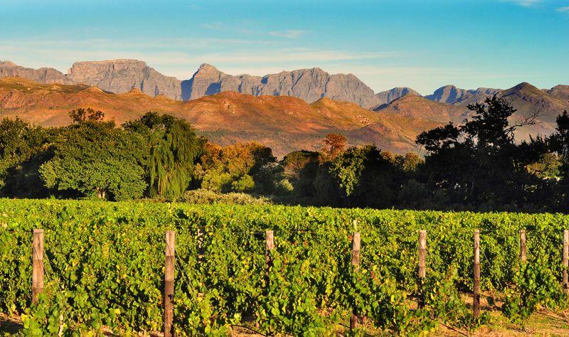 Stellenbosch winegrowing Cape Town