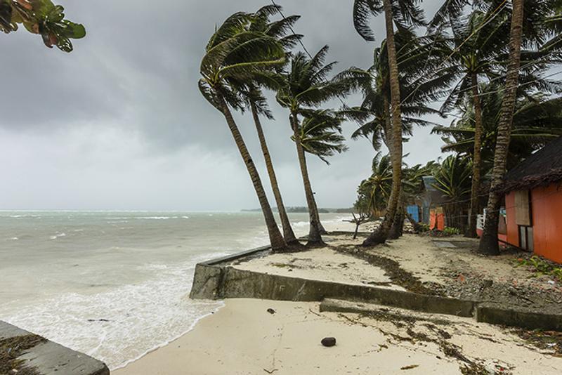 Пальма на берегу моря во время сезона ураганов на острове Куба