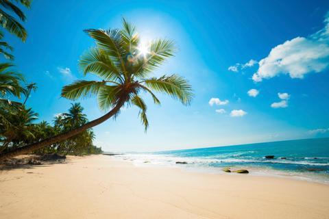 playa con palmera en las maldivas