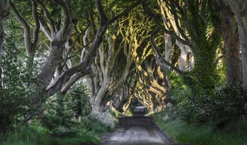"""La carretera de los Reyes cruza los espectaculares """"setos oscuros"""""""