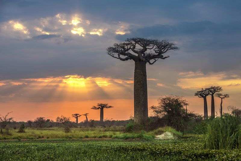 Dove andare in vacanza a Gennaio: Madagascar