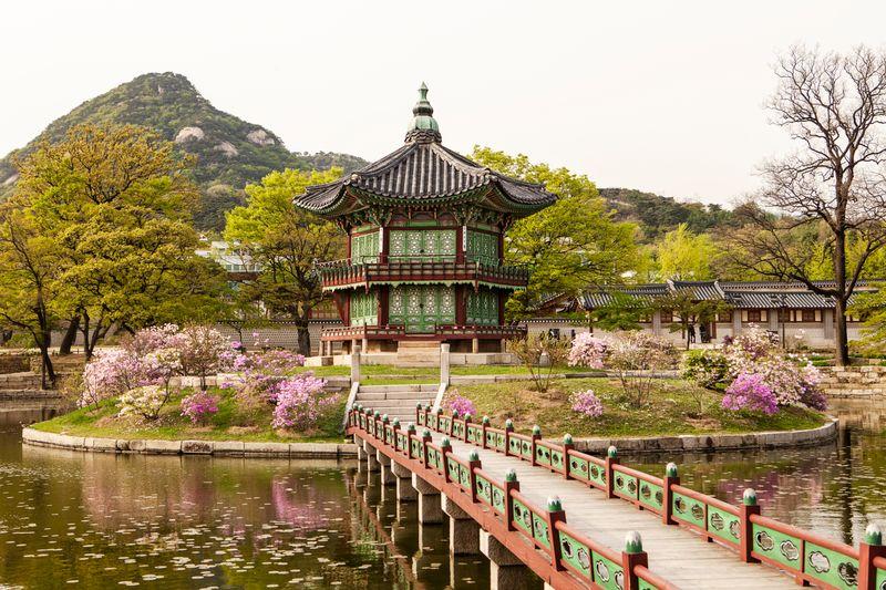 Seoul vào mùa hoa anh đào