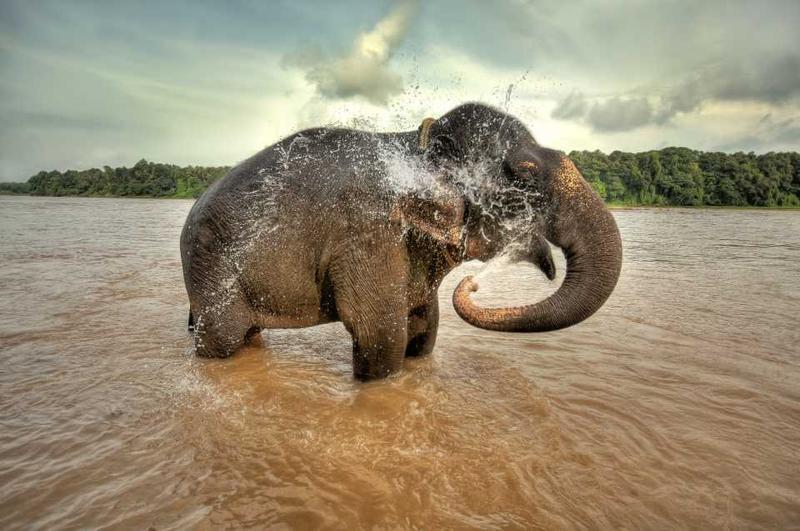 Слон купается в озере