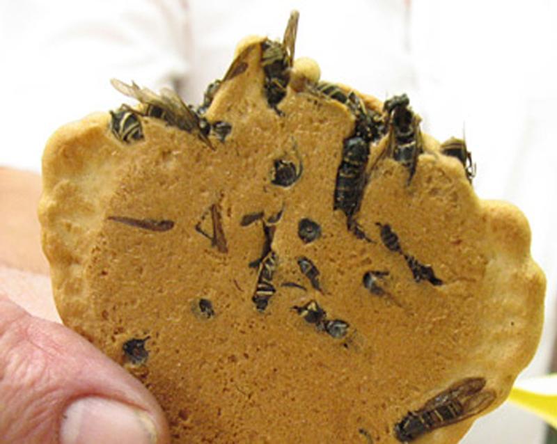 Печенье с осами, Япония