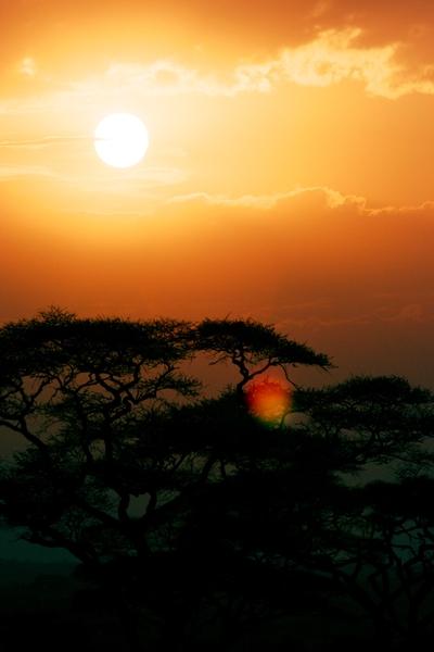 Ηλιοβασίλεμα πάνω απ' τα δέντρα στην Τανζανία