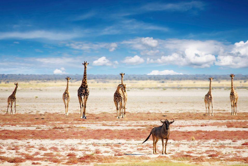Die schönsten Nationalparks in Afrika: Etosha Nationalpark, Namibia