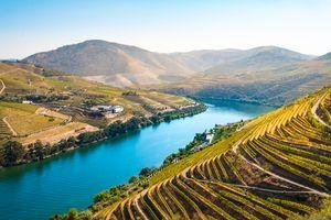 Виноградники Португалии