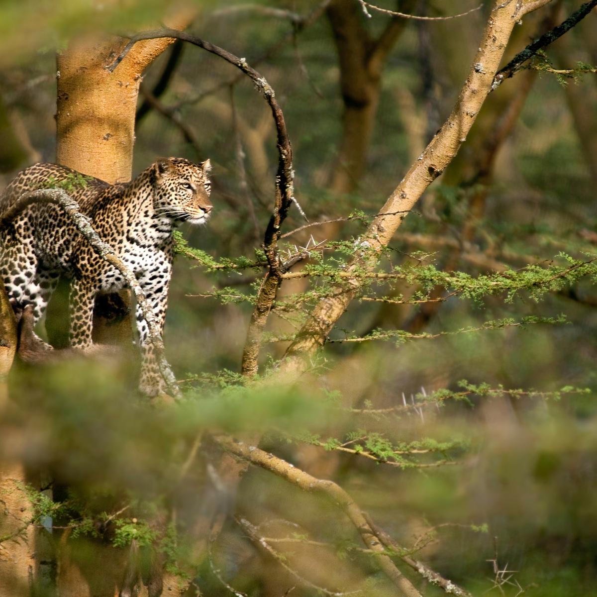 Die schönsten Reiseziele Afrikas: Okavangodelta, Botsuana