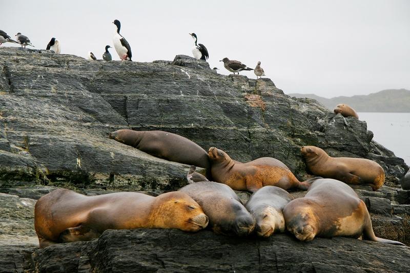 Viaggio in Patagonia, animali
