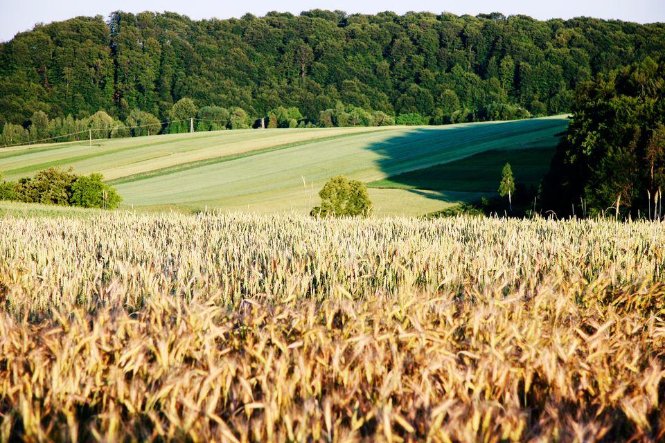Jesień w Polsce w pełnej krasie: Roztocze