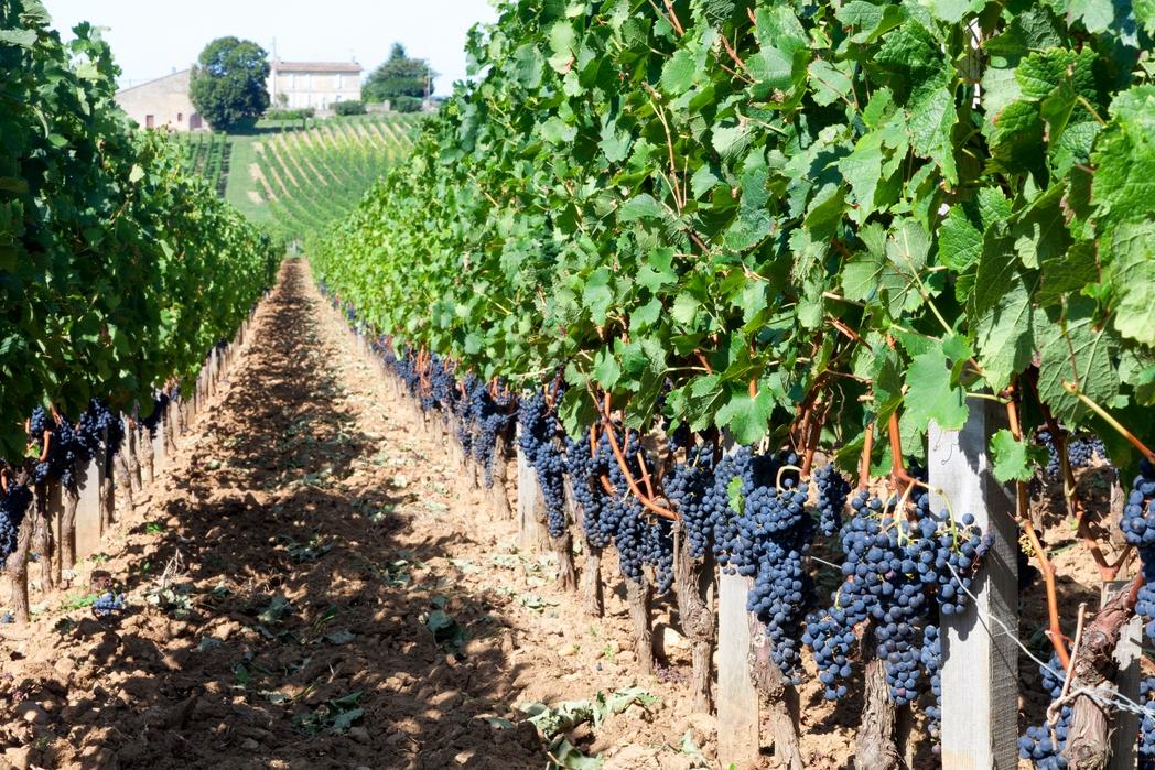 Vino Bordeaux