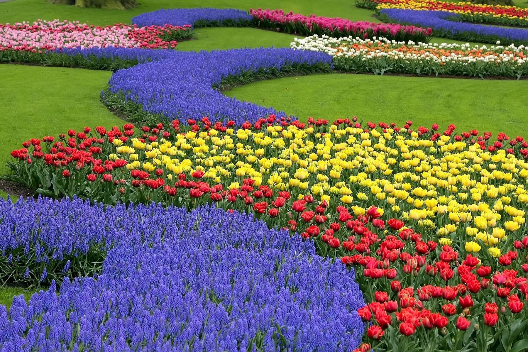 Keukenhof, Países Bajos, viajar en marzo