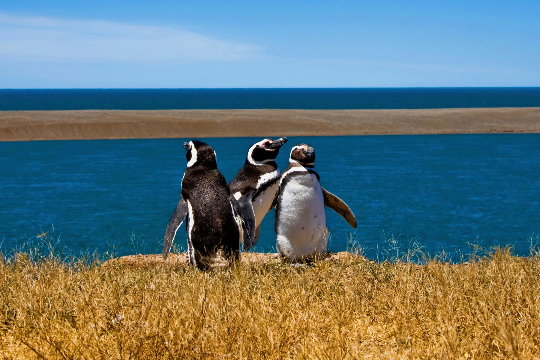 3 penguins relaxing on a sunny day in the mountains of southern Argentina